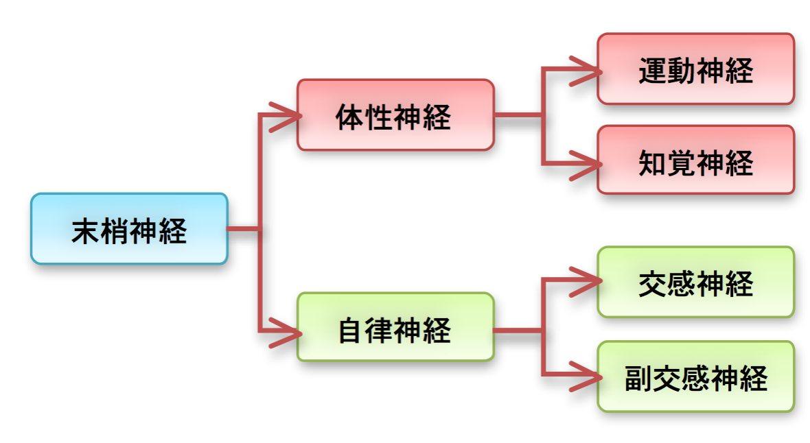 神経の機能的分類